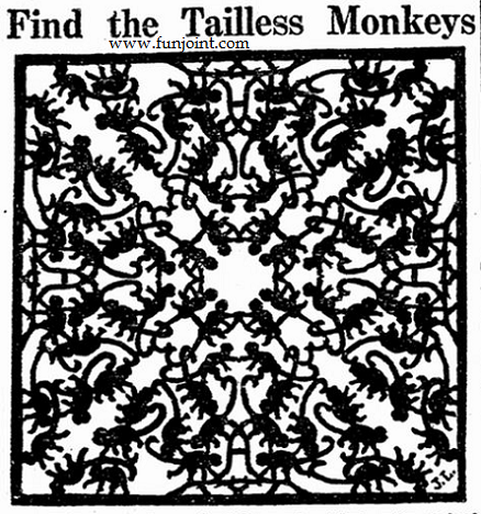Tailless Monkey Puzzle